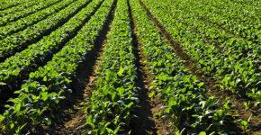Ibérica Sugar creará 200 puestos de trabajo directos en Mérida. (iStock)